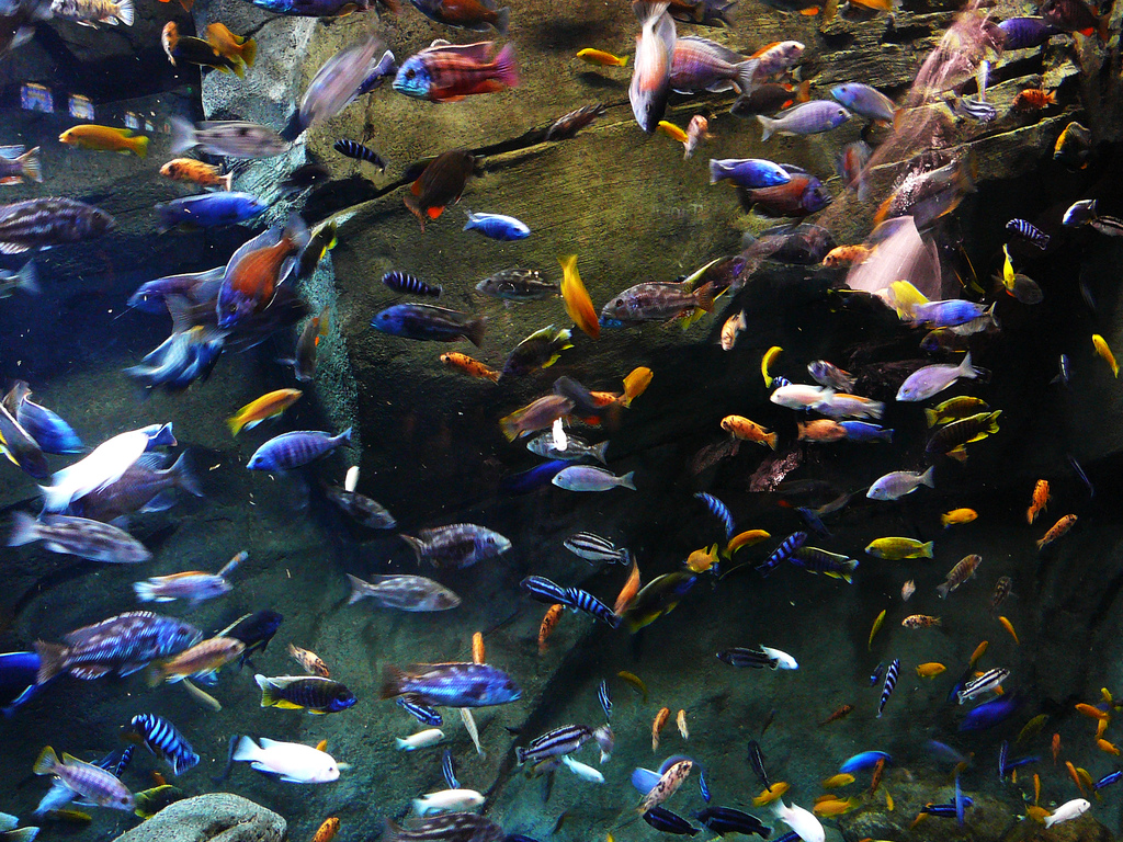 Saltwater Tropical Fish Images