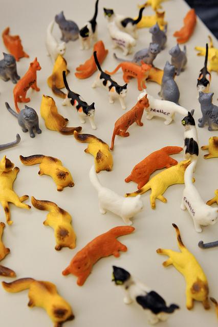 Herding cats...meow!