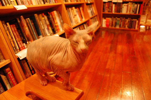 hairless cat in a book store