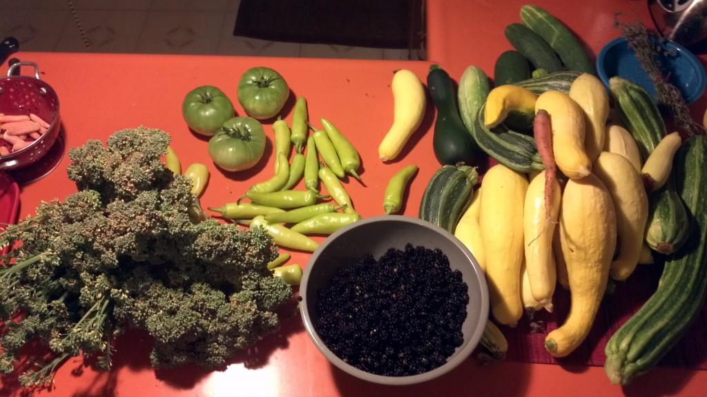 A modest harvest