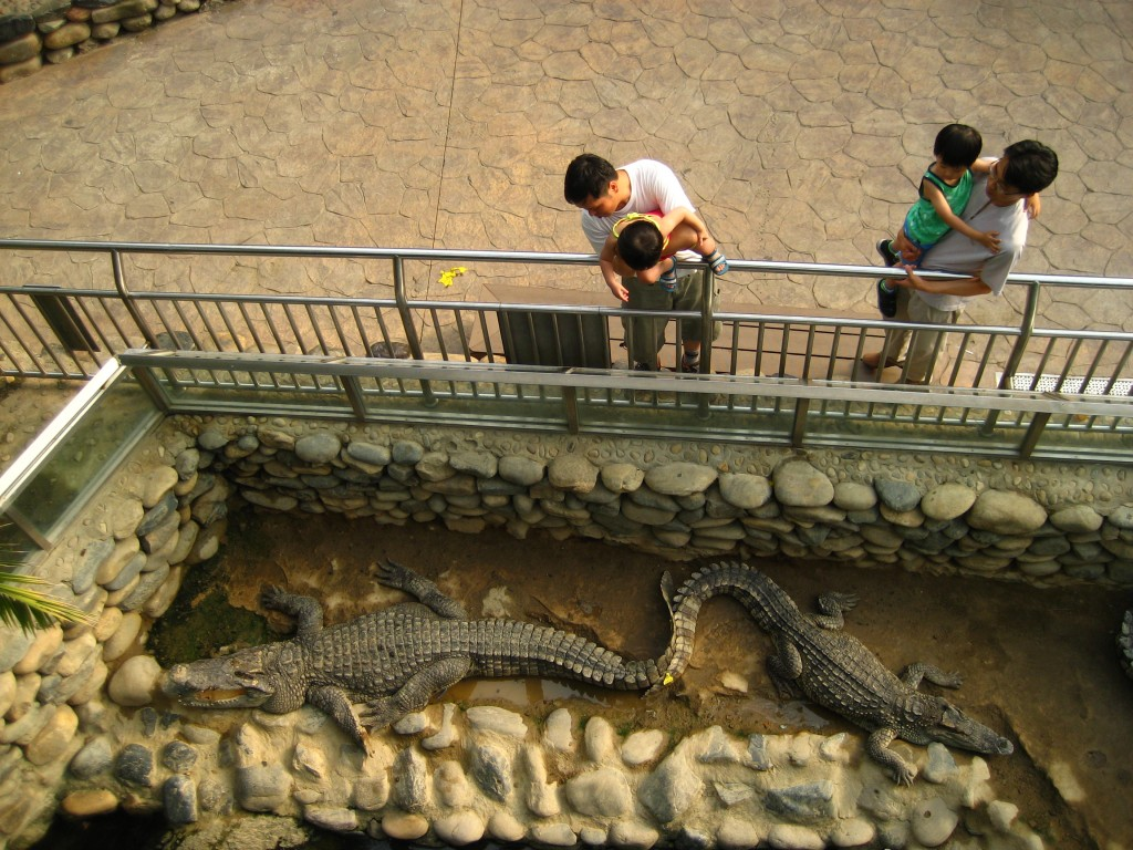 Yes, those are real crocodiles